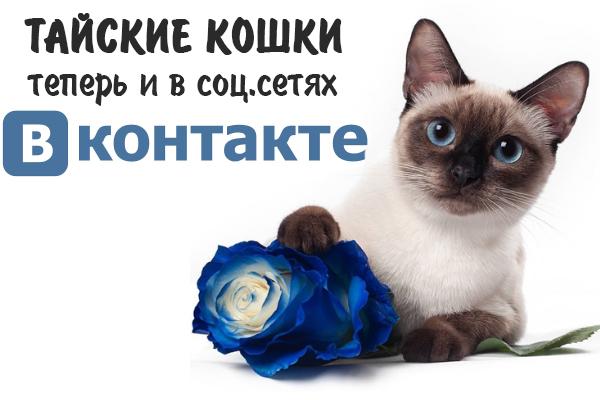 тайские кошки ВКонтакте