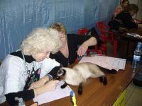 Ирина Гусева судит тайскую кошку