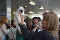 Марина литвина судит тайского кота